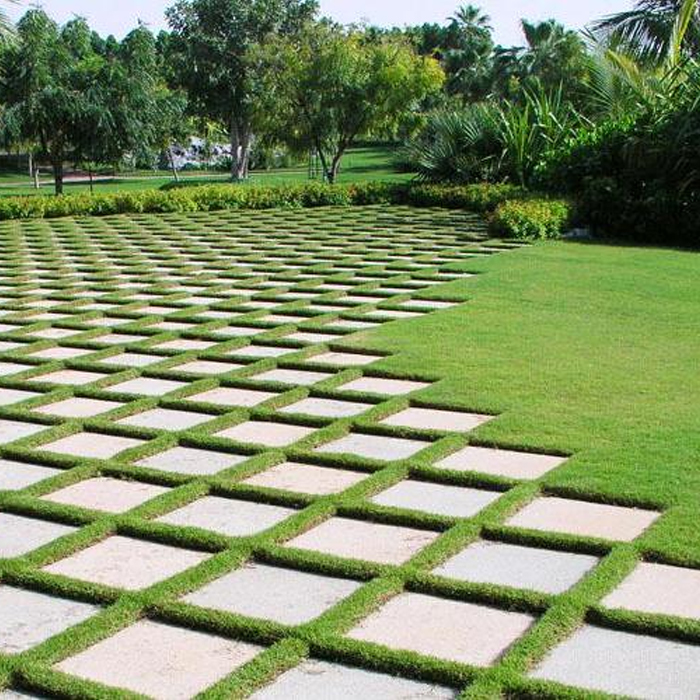 Cultivation Of Natural Grass-2