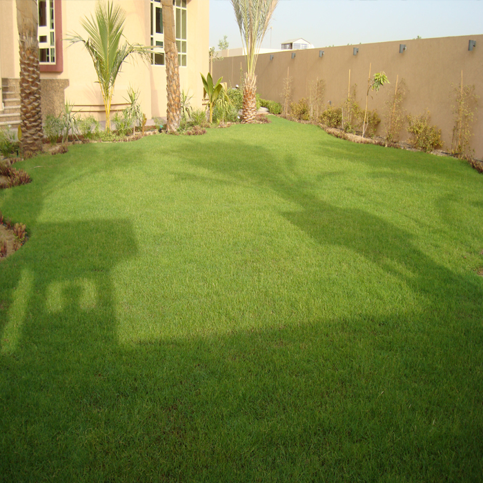 Cultivation Of Natural Grass-3