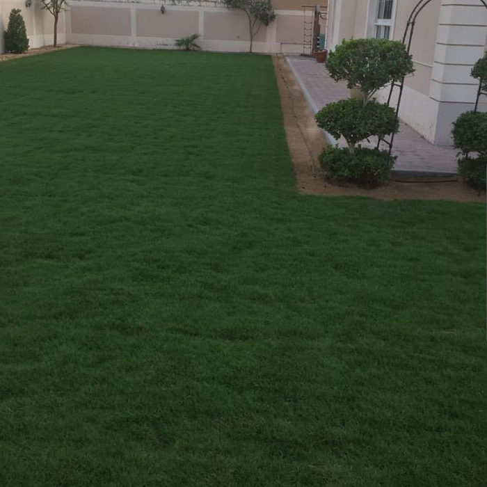 Cultivation Of Natural Grass-5
