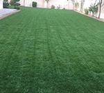 زراعة العشب الطبيعي